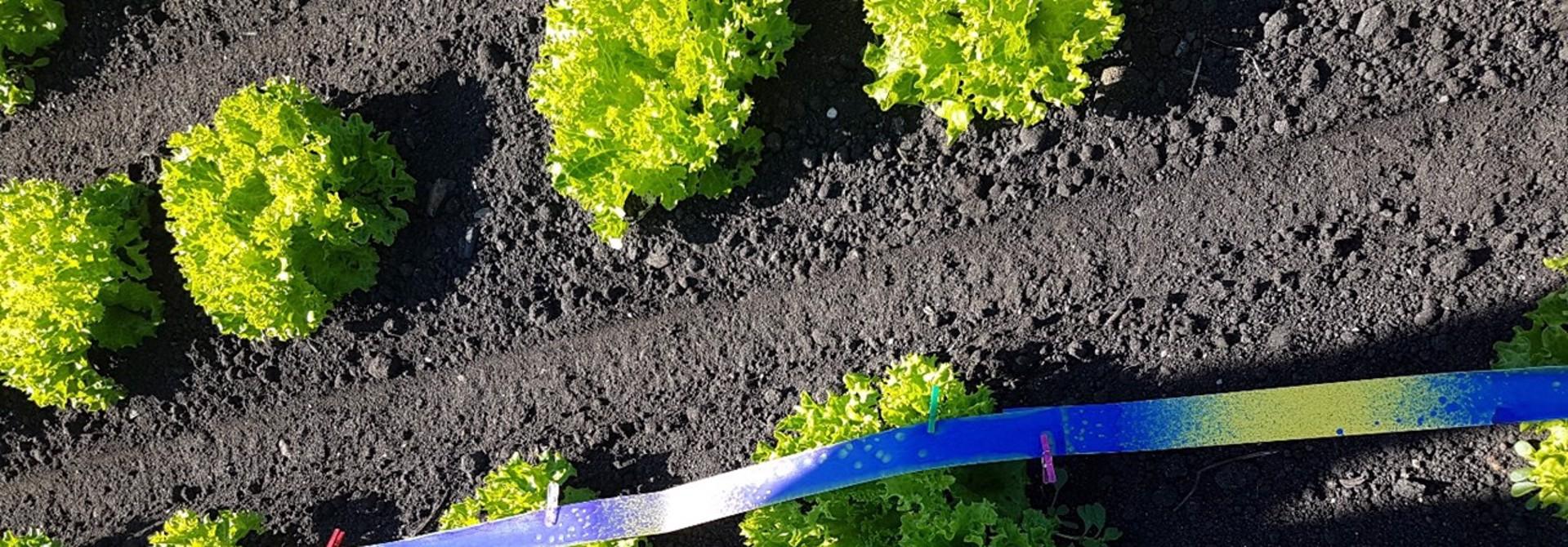 Durch den Pflanzenschutzroboter werden gezielt nur die Pflanzenku00f6pfe mit PSM behandelt. Eine Reduktion bis zu 80% der Mittelmenge scheint im Bereich des Mu00f6glichen zu liegen>