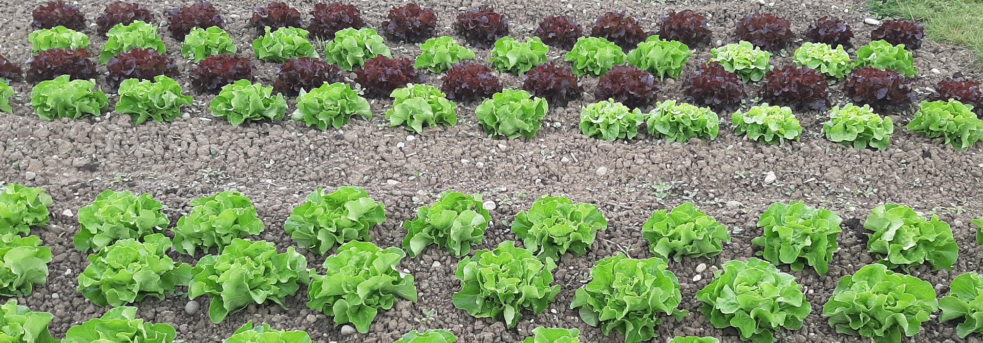 Salat>