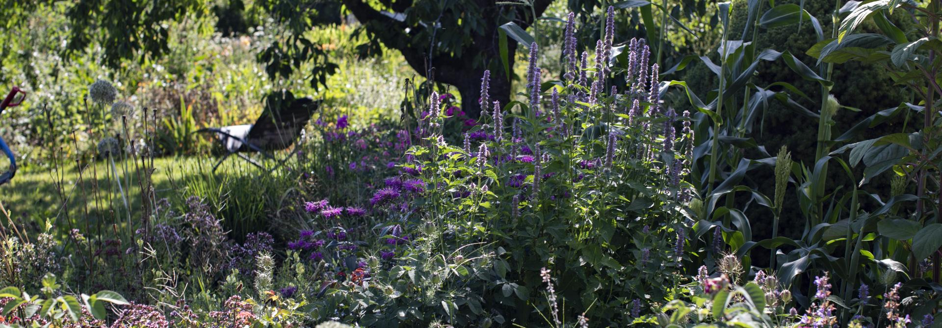 Vielfalt im Permakulturgarten - auch im eigenen Hausgarten mu00f6glich.>