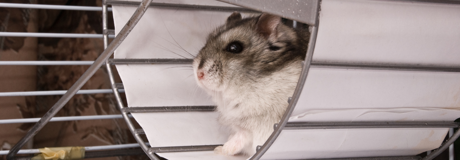Raus aus dem Hamsterrad>