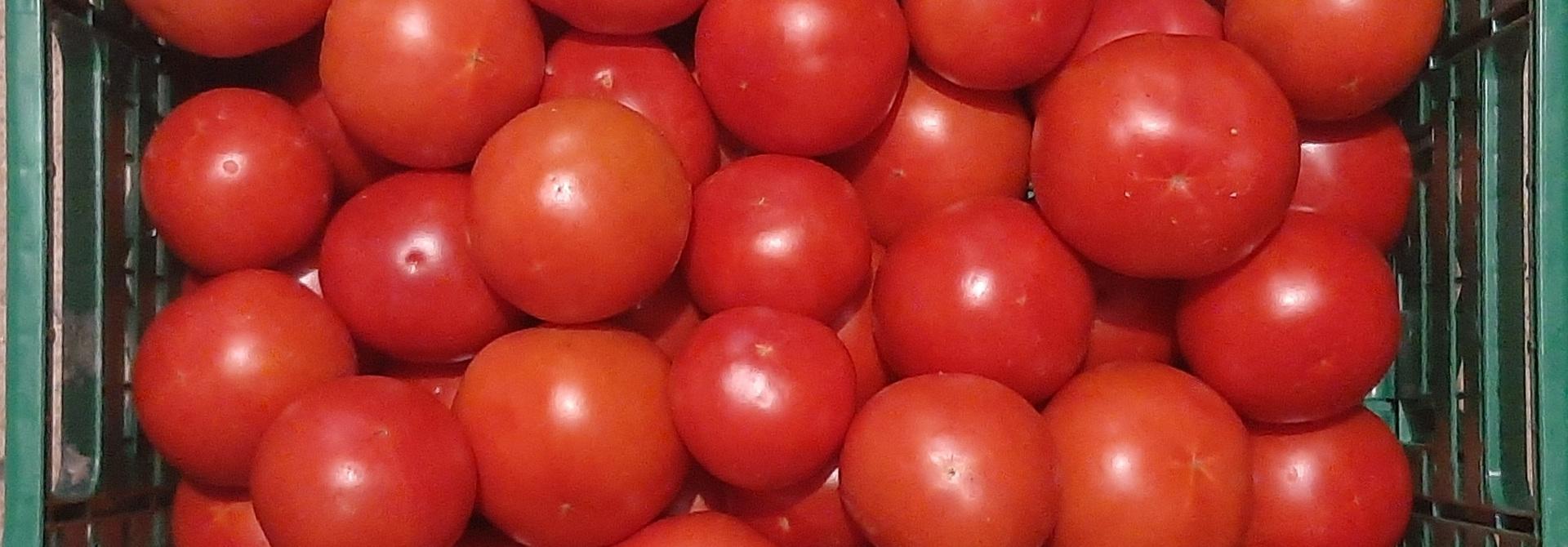 Tomaten>