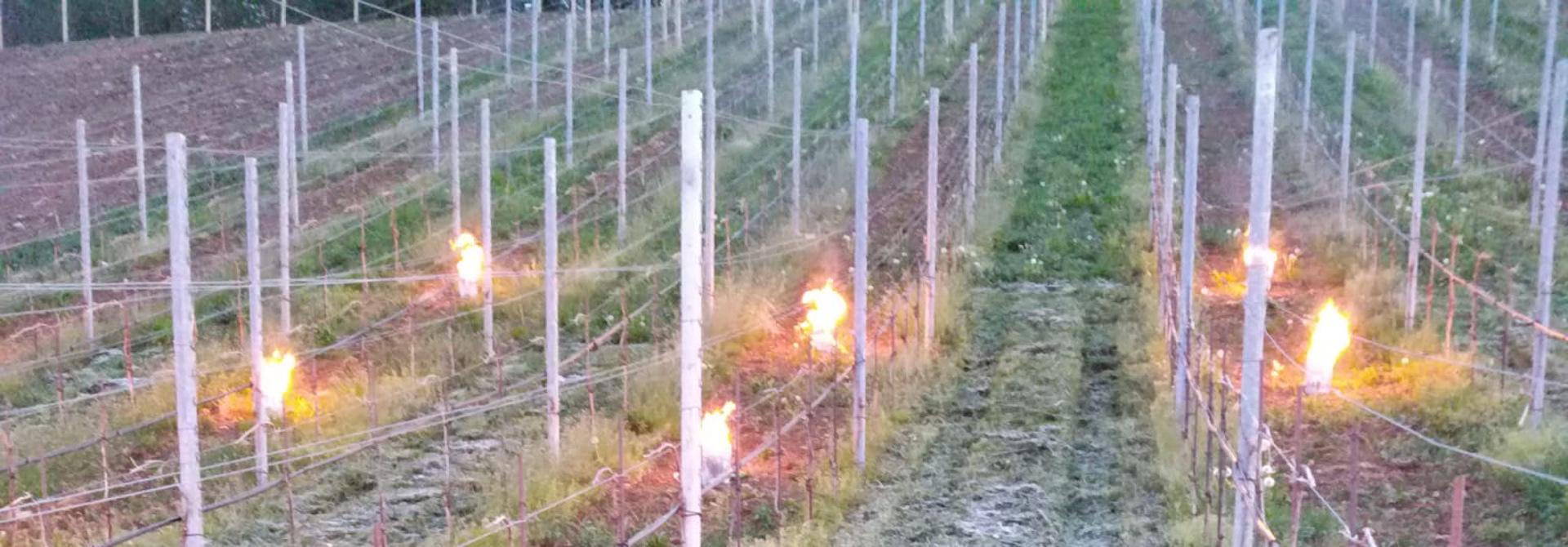 Kerzen werden eingesetzt um die Reben vor Frostschu00e4den zu schu00fctzen>