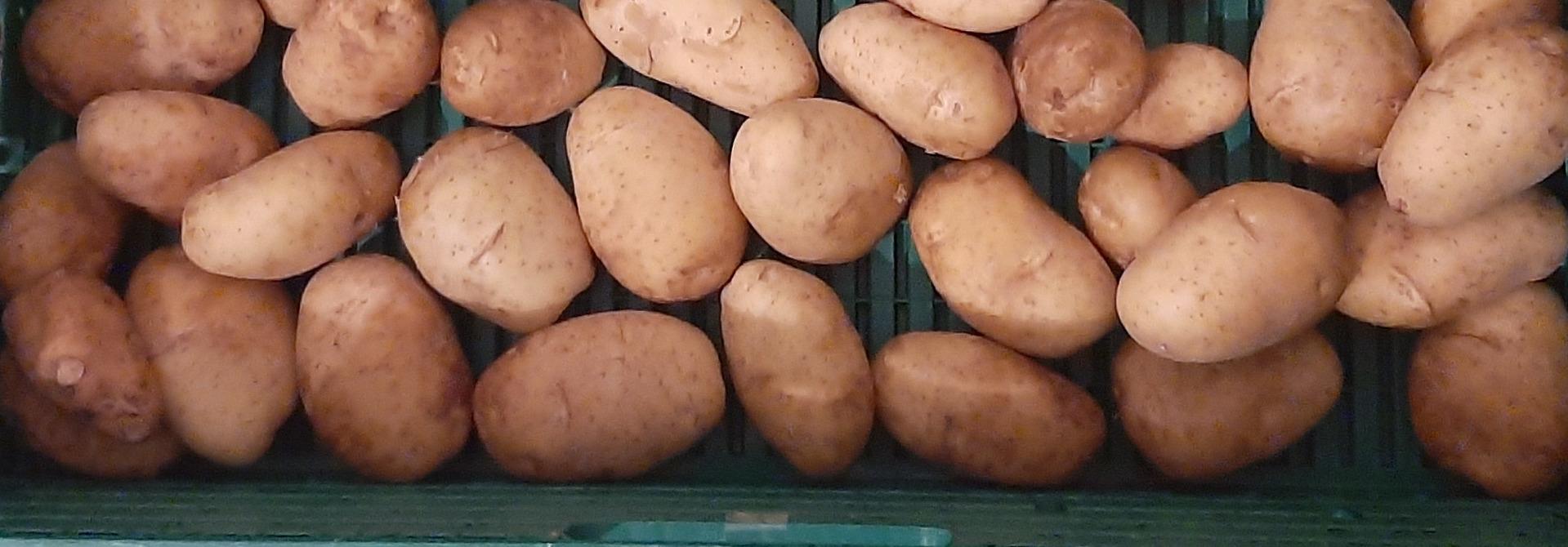 Kartoffeln>