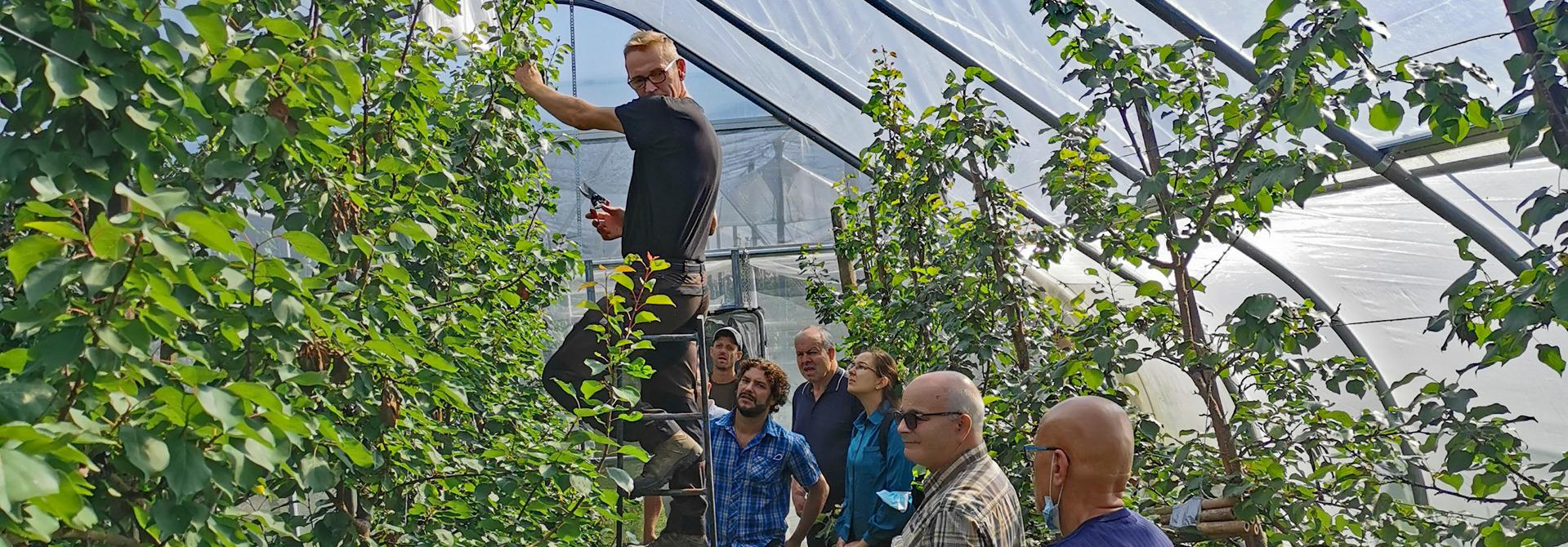 Ralf Merzenich zeigte in der Praxis den Schnitt der Aprikosen nach dem System Klickschnitt aus Nordholland.>