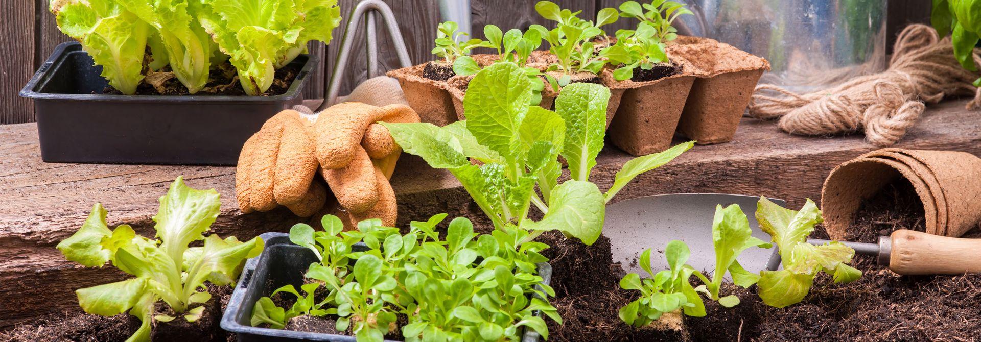 Eine gute Gartenplanung garantiert einen abwechslungsreichen Menuplan>