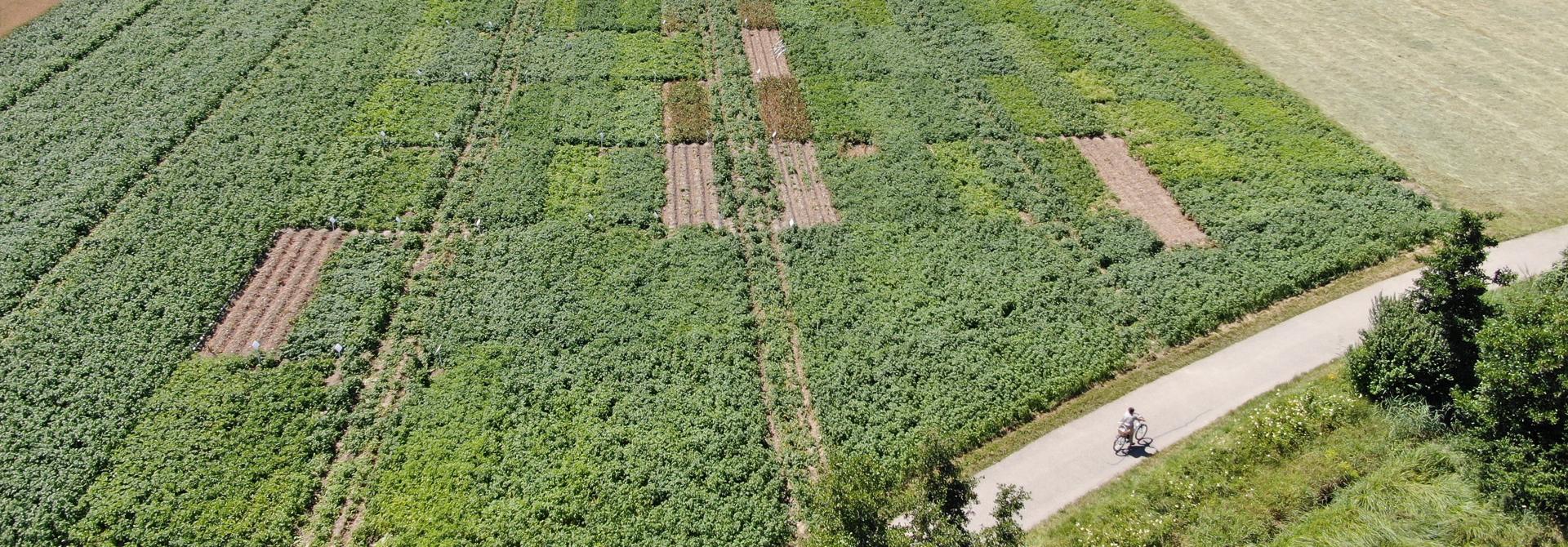 Die Kartoffel-Versuchsanlage in Humlikon am 7. Juli 2020>