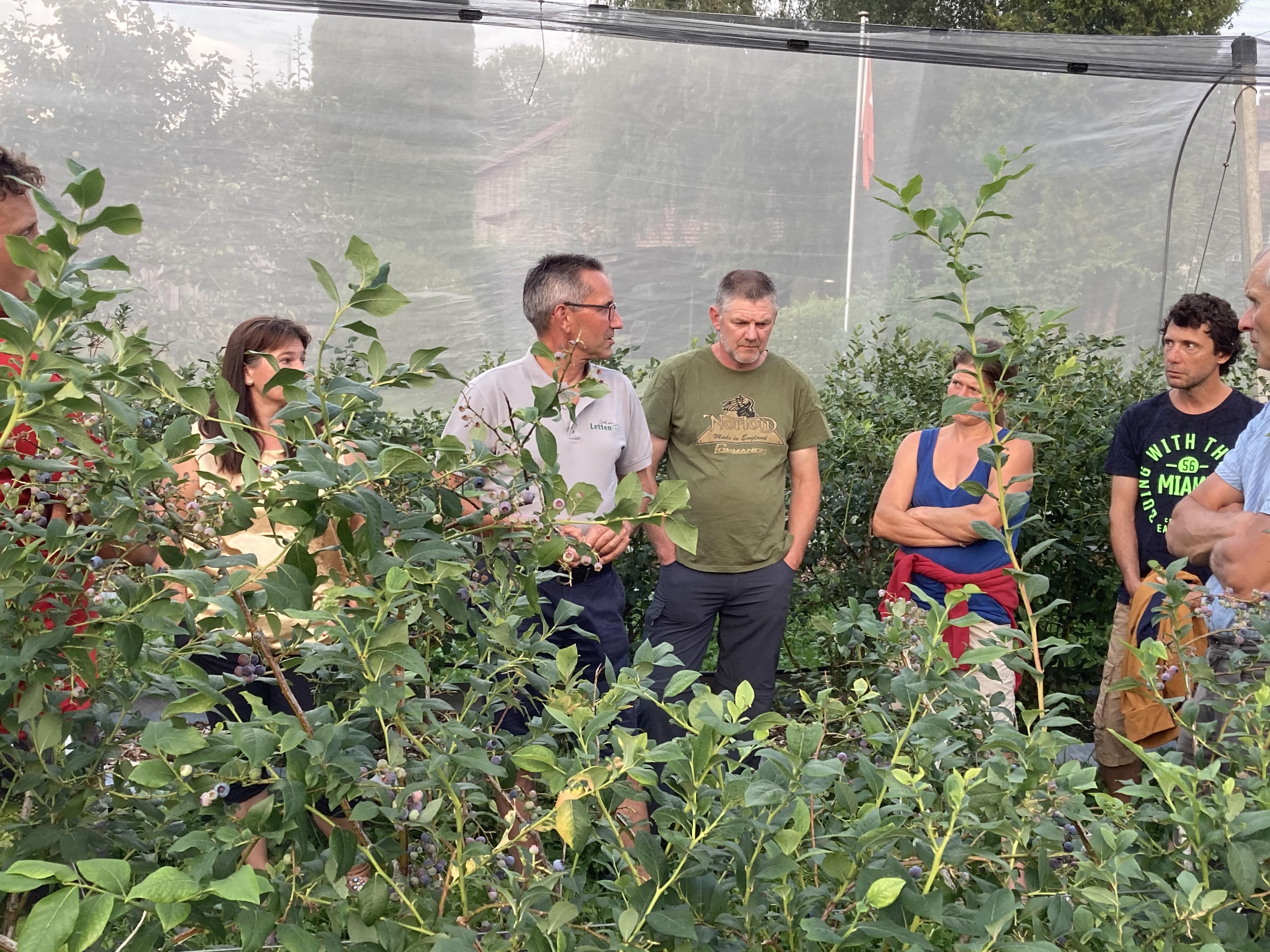 Praxisabend Bioumstellung - Heidelbeeren