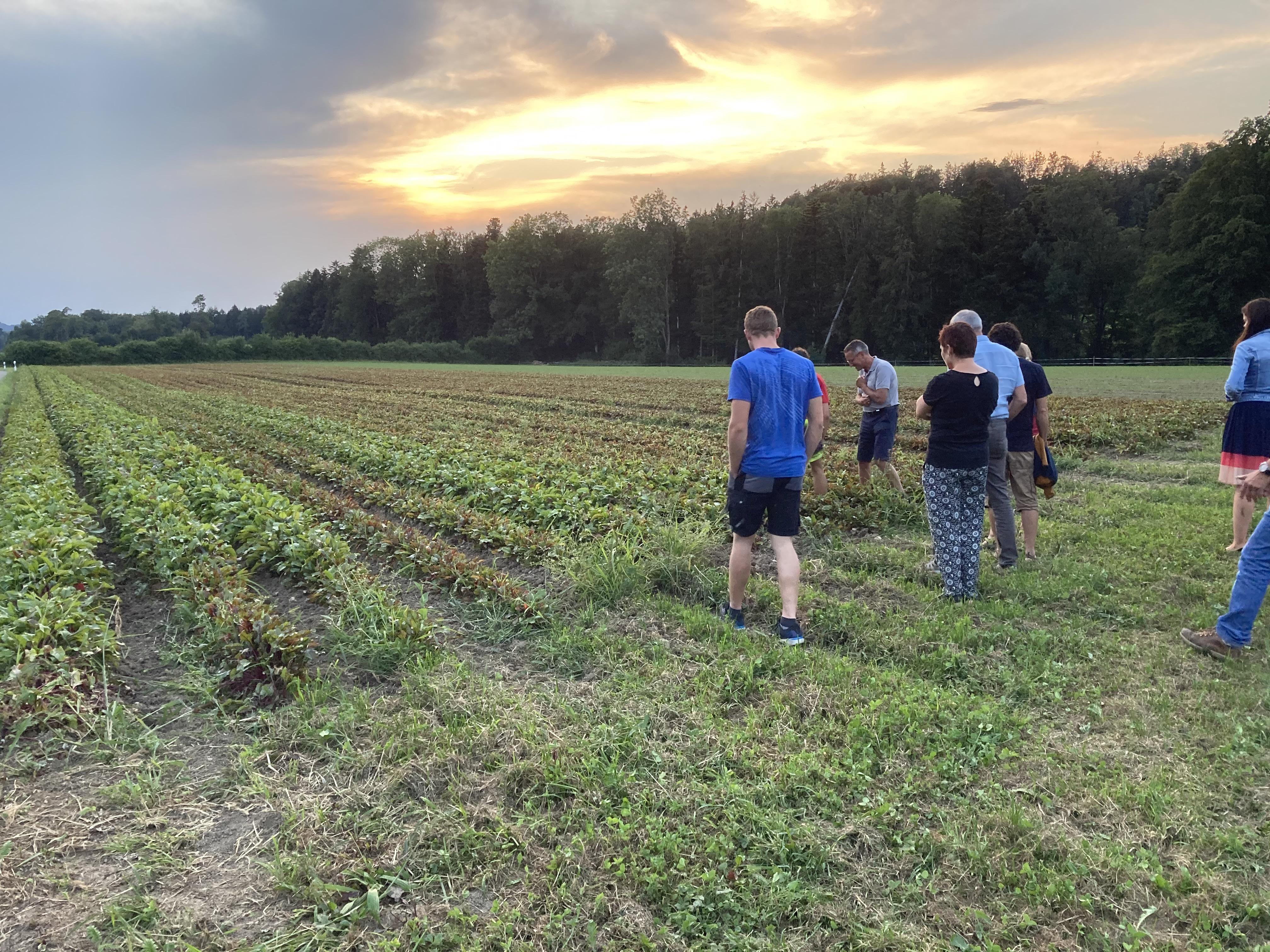 Praxisabend Bioumstellung - Feldgemüse Bioranden
