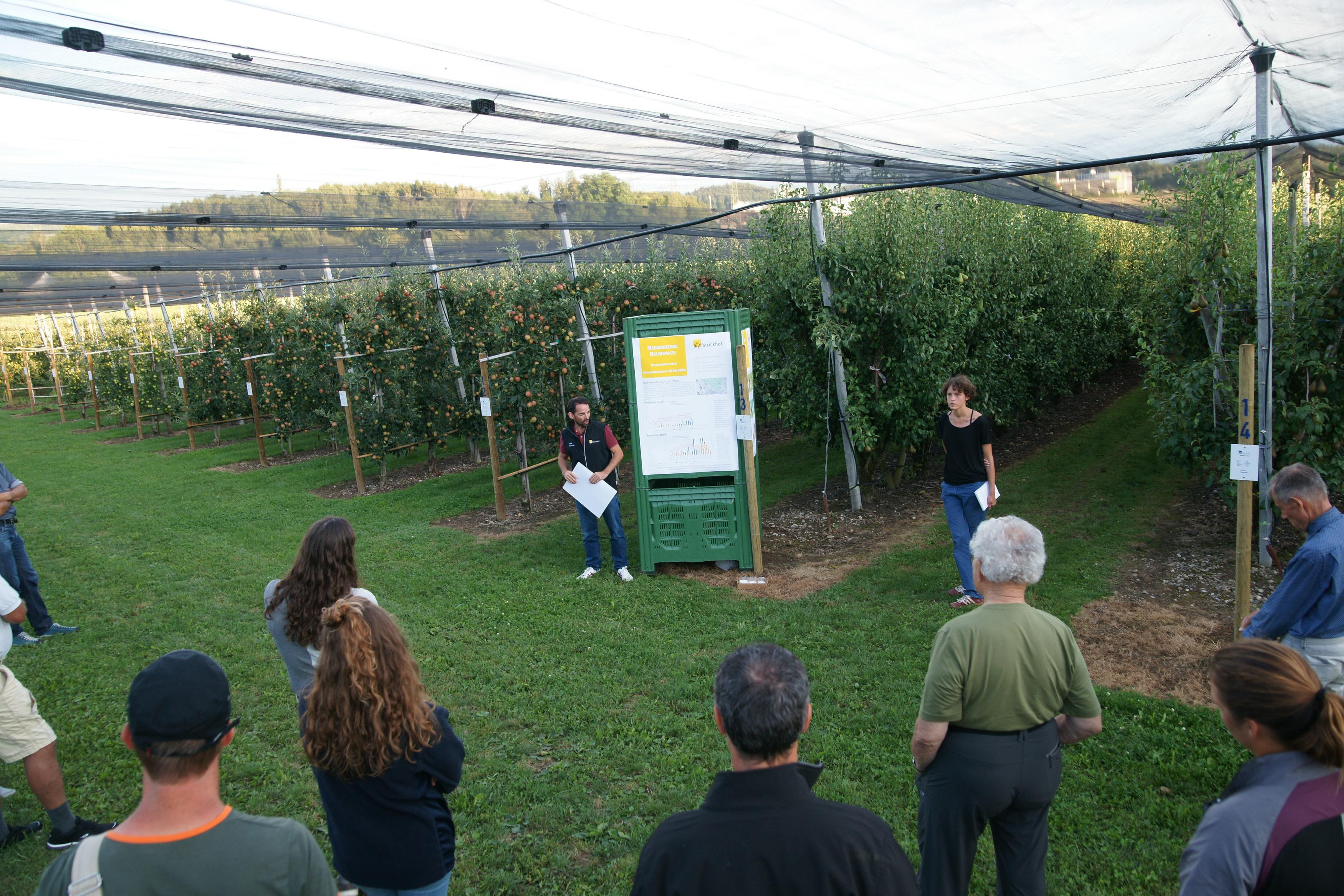 David Szalatnay und Lea Andrae berichten an der Obst-Sommertagung 2020 über die aktuelle Situation der Marmorierten Baumwanze