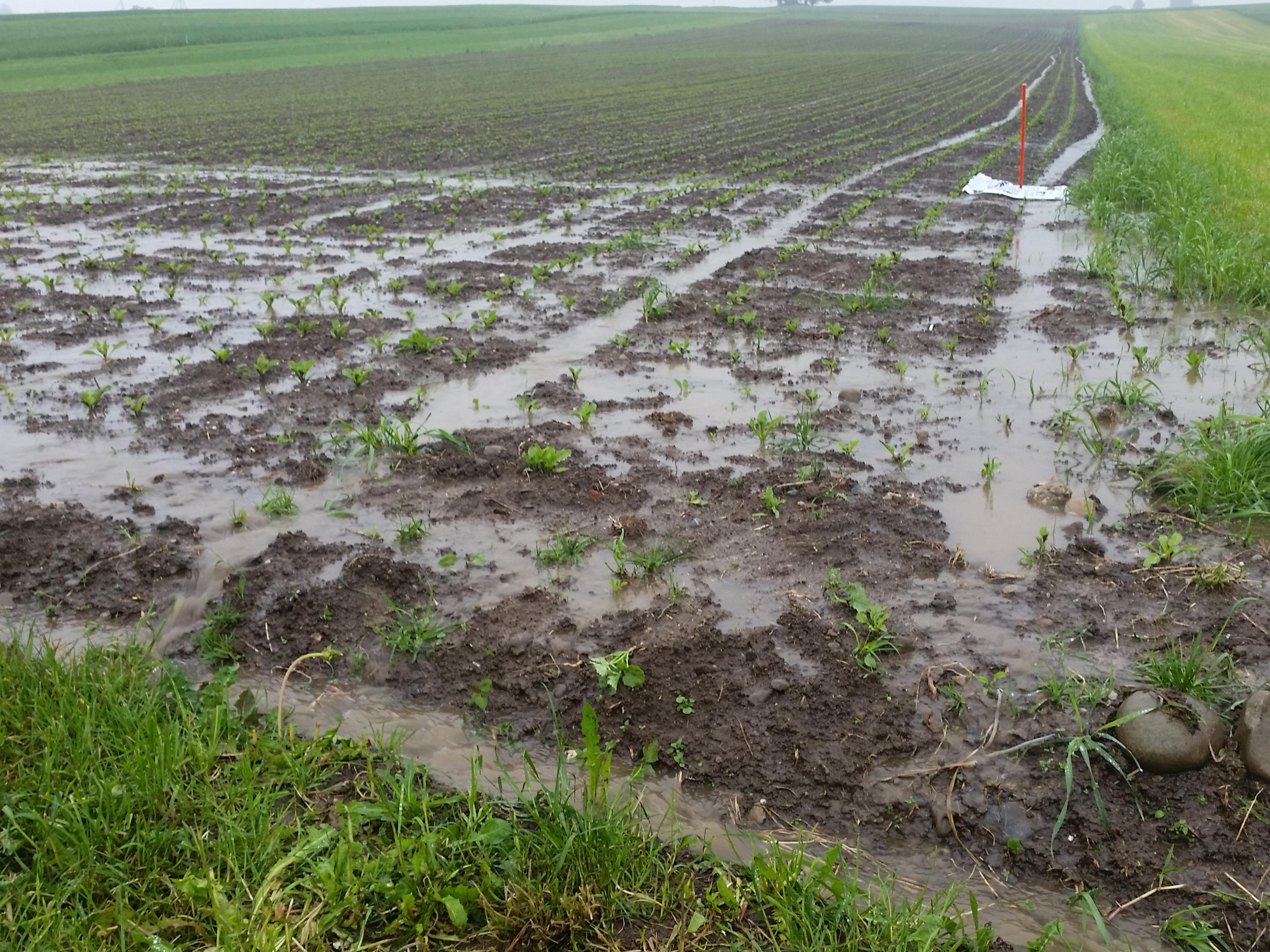 Nach einem Starkniederschlag kommt es zu Abschwemmung. Neben wertvoller Erde werden so auch allfällig ausgebrachte Pflanzenschutzmittel ausgewaschen.