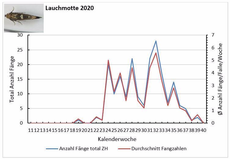 Entwicklung des Flugs der Lauchmotte im Jahr 2020