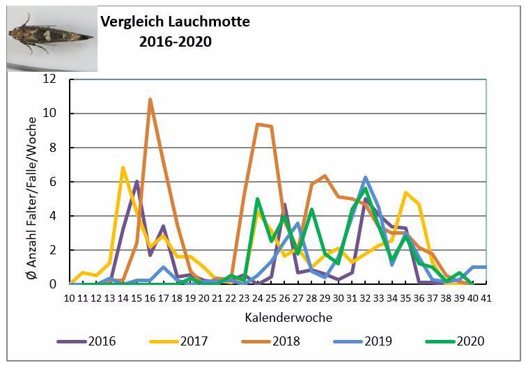 Entwicklung des Flugs der Lauchmotte im langjährigen Vergleich