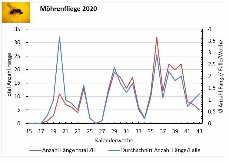 Entwicklung des Flugs der Möhrenfliege im Jahr 2020