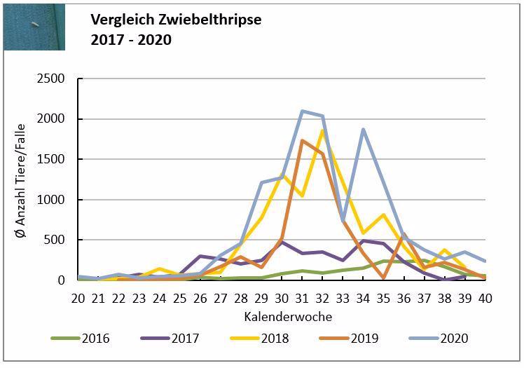 Entwicklung der Zwiebelthripspopulation im langjährigen Vergleich
