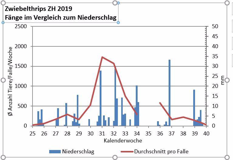 Entwicklung der Zwiebelthripspopulation 2019 und Niederschlagsdaten