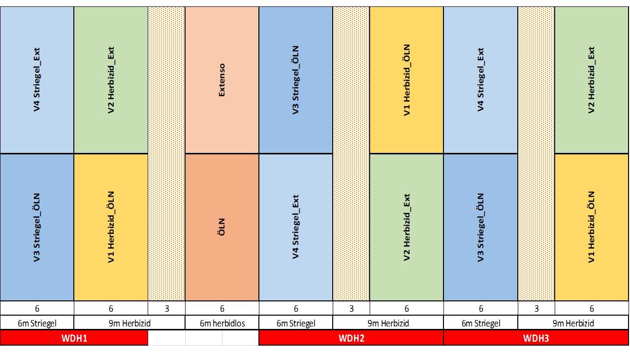 Abb. 1: Versuchsplan Striegelversuch in Winterweizen am Beispiel Lindau 2020