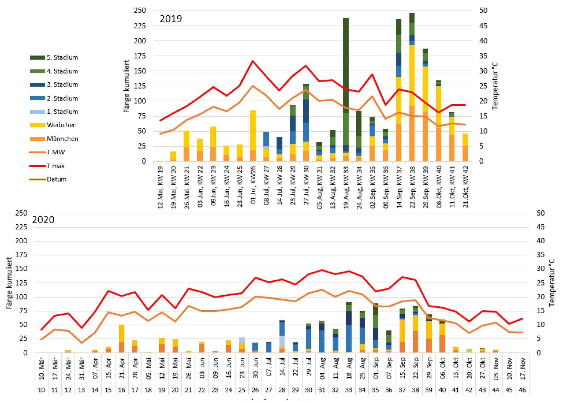 Marmorierte Baumwanze Vergleich Monitoring 2019 & 2020