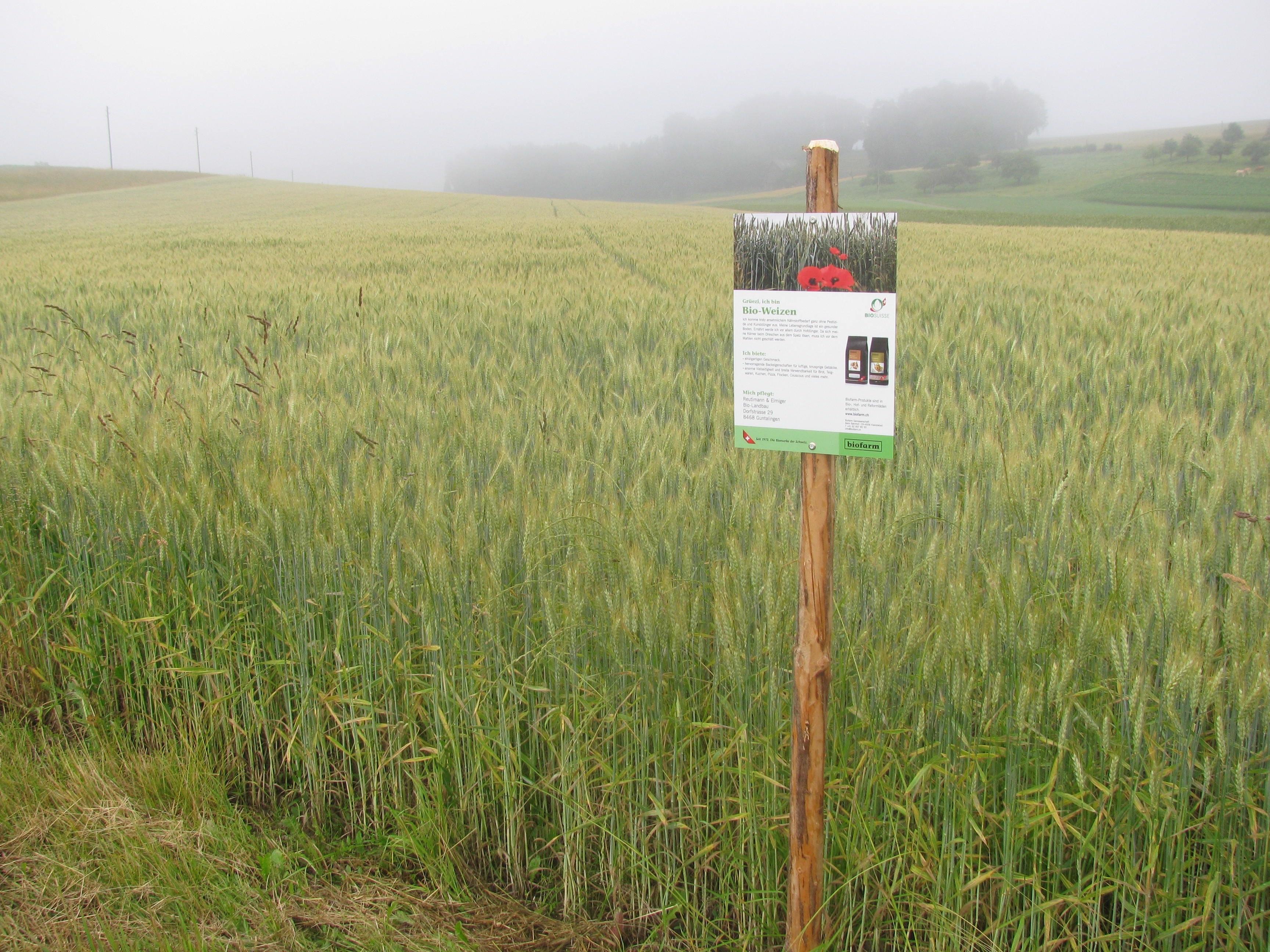 Biofarm-Feldtafel vor Bio-Weizen