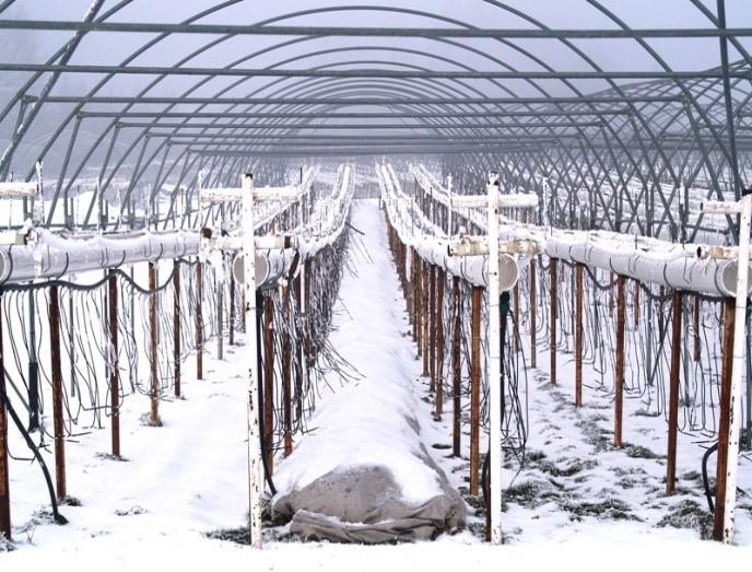 Substrat-Erdbeeren Frostschutz