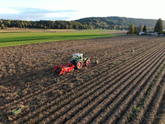 Bio-Süsskartoffeln, Thurlandbio.ch