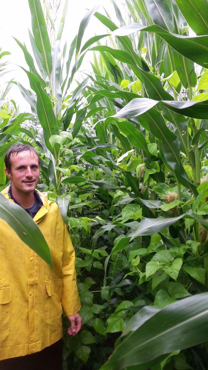 Biolandwirt Flurin Keller vor Mais-Bohnen-Mischkultur