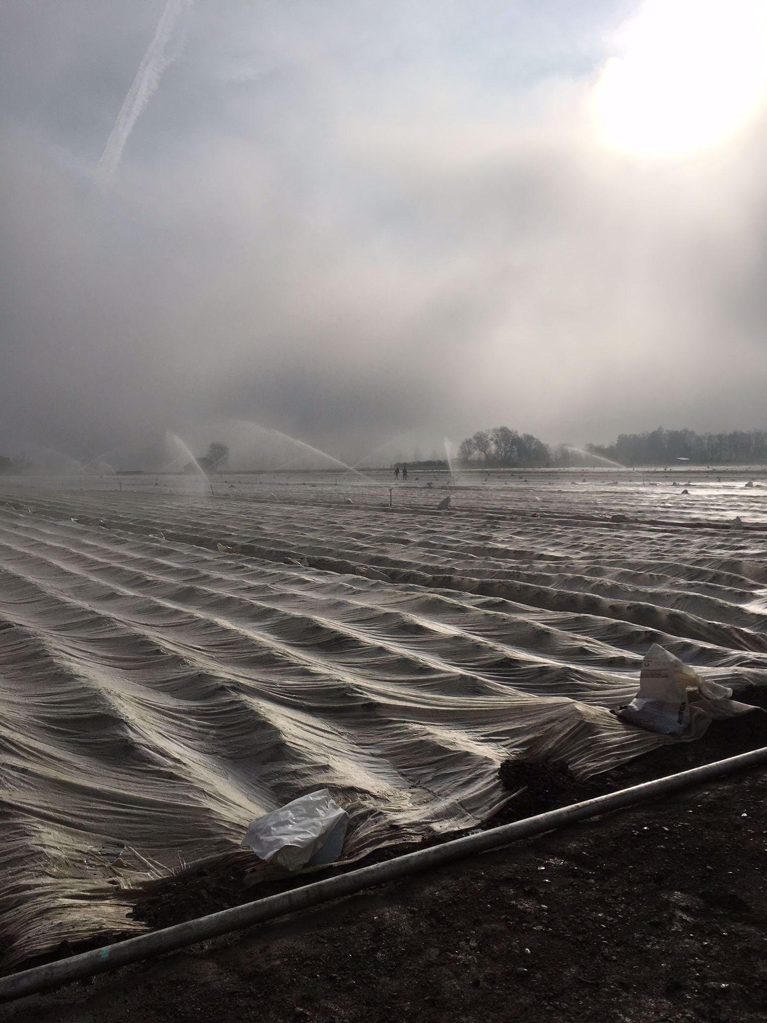 Biokartoffeln Frostschutzberegnung