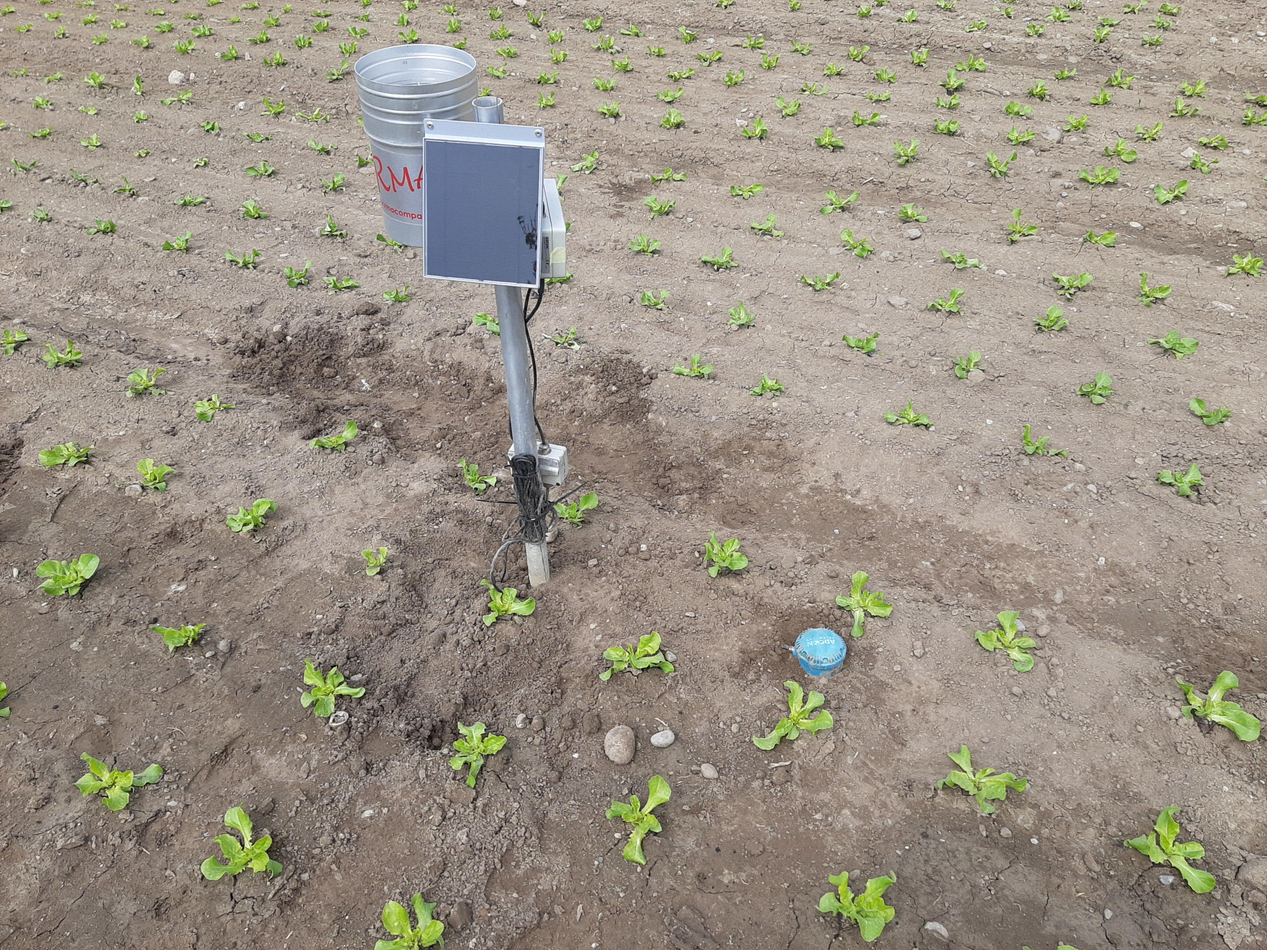 Installierte Bodenfeuchtesonde in einem Salatfeld